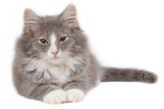 утомлянный котенок 2 Стоковые Фото