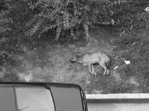 Утомленная бездомная собака Стоковое фото RF