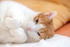 Утомленные остатки кота имбиря на кровати и смотреть с одним глазом Стоковые Изображения RF