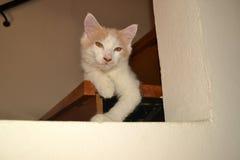 утомлянный кот Стоковое Изображение