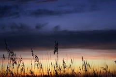 Утренняя звезда Стоковые Фотографии RF