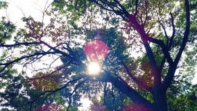 Утренняя звезда стоковое фото rf