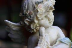 утро ангела Стоковое Фото