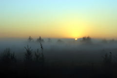 Утро ландшафта лета туманное на зоре Стоковые Изображения RF