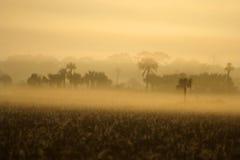 утро болотистых низменностей туманнейшее Стоковое Изображение RF