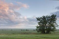 Утро весны в поле стоковая фотография rf