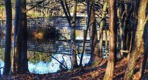 Утро весны на природном парке дна Sandy стоковое фото rf