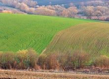 Утро весны пахотноспособное и поле и сельская местность роста Стоковая Фотография