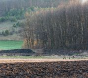 Утро весны пахотноспособное и поле и сельская местность роста Стоковые Изображения RF