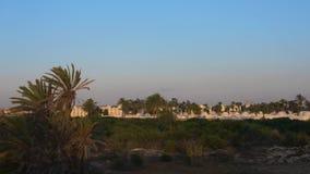 Утро восхода солнца над старым аравийским ландшафтом города Зеленые bushes Листья пальмы пошатывают на ветре Lockdown акции видеоматериалы