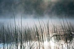 Утро в болоте, болото Вода и трава, роса Karelia стоковое фото