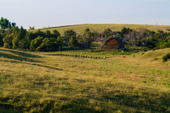 Утро в дворе фермы Стоковое Изображение
