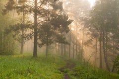 Утро в волшебном лесе Стоковое Изображение RF