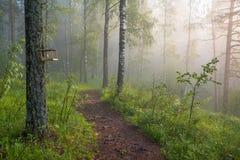 Утро в волшебном лесе Стоковые Изображения