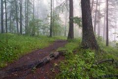 Утро в волшебном лесе Стоковая Фотография RF