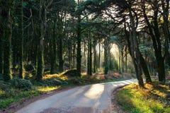 Утро в зеленом лесе Португалии, Sintra Стоковая Фотография RF