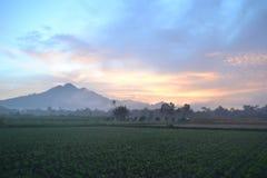 Утро в моей деревне стоковое изображение rf