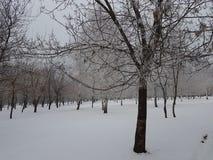 Утро в парке зимы стоковое изображение rf