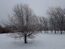 Утро в парке зимы стоковая фотография rf