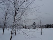 Утро в парке зимы стоковые изображения
