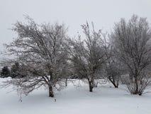 Утро в парке зимы стоковые изображения rf