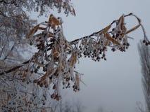 Утро в парке зимы стоковое фото