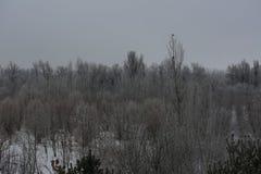 Утро в парке зимы стоковая фотография