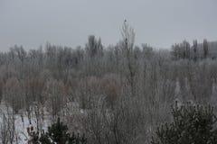 Утро в парке зимы стоковое изображение