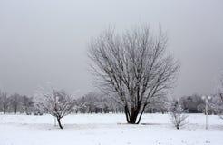 Утро в парке зимы стоковые фото