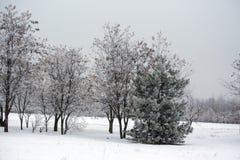 Утро в парке зимы стоковые фотографии rf