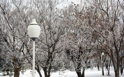 Утро в парке зимы стоковое фото rf