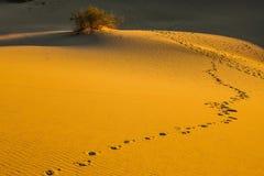 Утро в песчанных дюнах Mesquite плоских Стоковое фото RF