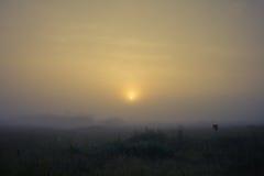 Утро в поле Стоковые Фото