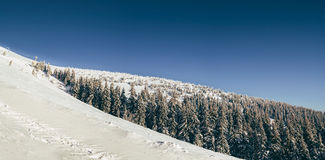 Утро в прикарпатских горах Стоковое фото RF