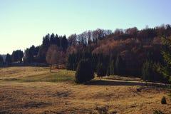 Утро в древесинах Стоковое Изображение RF