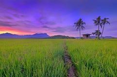 Утро в рисовых полях Стоковые Изображения