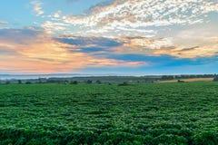 Утро в сельских районах Стоковое Изображение