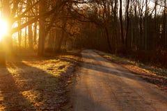 Утро в сельской местности Стоковое Изображение