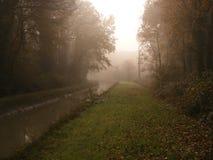 Утро в сосновой древесине Стоковые Изображения