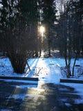 Утро в январе стоковое фото