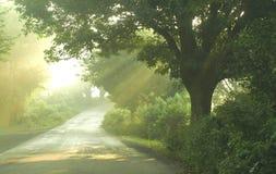 Утро в ярком свете на пути стоковое фото