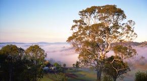 Утро в Bega Австралии стоковые изображения rf