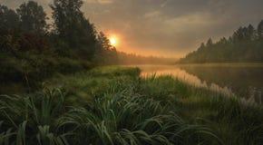 Утро в taiga Стоковые Фотографии RF