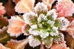 утро заморозка Стоковая Фотография