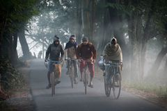 Утро зимы Бенгалии стоковые изображения rf