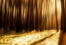 Утро зимы в лесе Стоковые Изображения RF