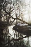 Утро зимы в лесе стоковые фотографии rf
