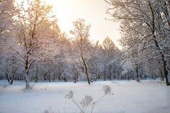 Утро зимы в парке города Khmelnitsky стоковые фотографии rf