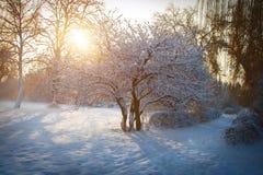 Утро зимы в парке города Khmelnitsky стоковое изображение rf