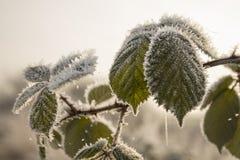 Утро зимы в Teufelsmoor около Бремена Германии Стоковая Фотография RF